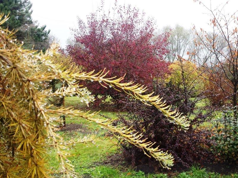 """Po ilgų liūčių neskubėkite augalų mulčiuoti ir uždengti, nes tokiu būdu tik """"užrakinsite"""" drėgmę."""