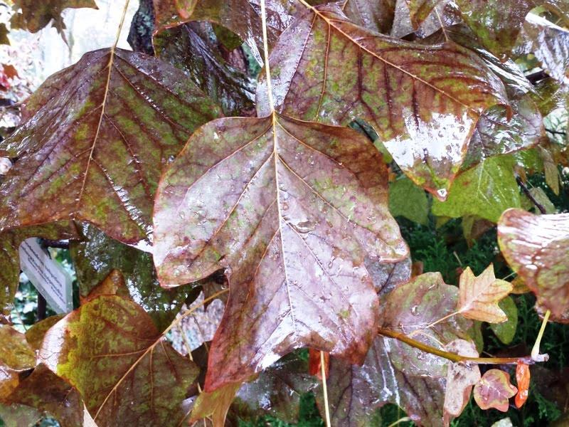 Daugelis augalų neperneša užmirkstančių šaknų. Jeigu augalo šaknys pažeistos vandens, pradeda geltonuoti jo lapai, tad atidžiai juos apžiūrėkite.
