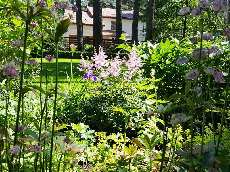 Ansio Birznieks sodas pavėsyje – svarbu pasirinkti tinkamus augalus ir gėlynas klestės.