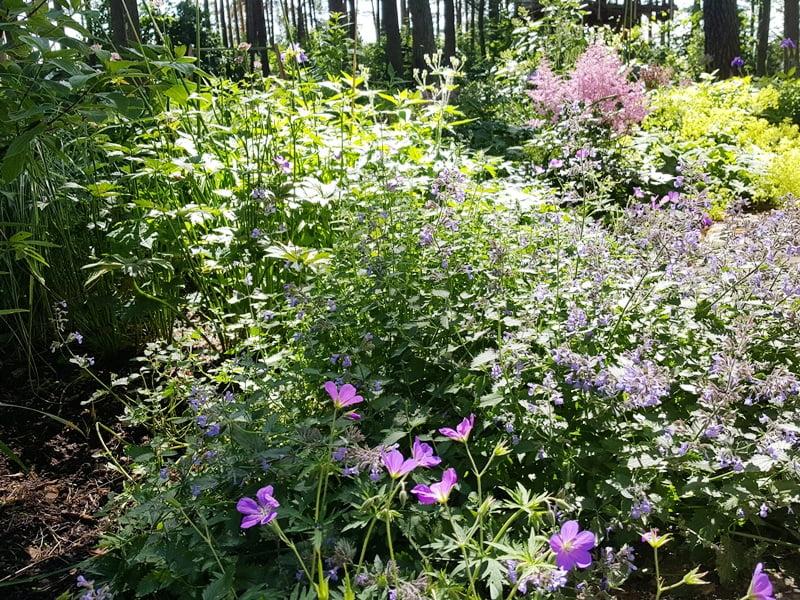 Puikus Ansio Birznieks pavėsio sodas yra puikus natūralistinio dizaino pavyzdys.