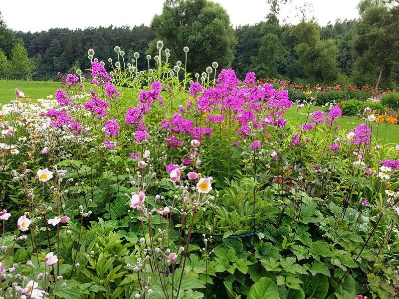 Ingės Auželienės augalų grupavimo pavyzdys.