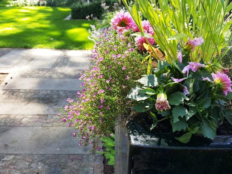 Gėlių kompozijos vazonuose keičiamos kelis kartus per metus.