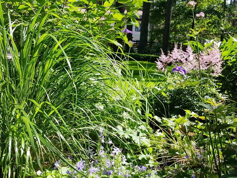 Reprezentacinės zonos gėlynas su daugiamečiais augalais. Nuotr. L. Liubertaitė