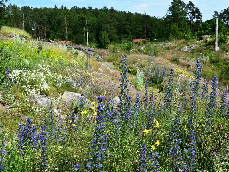 Kalnuotų vietovių augalai
