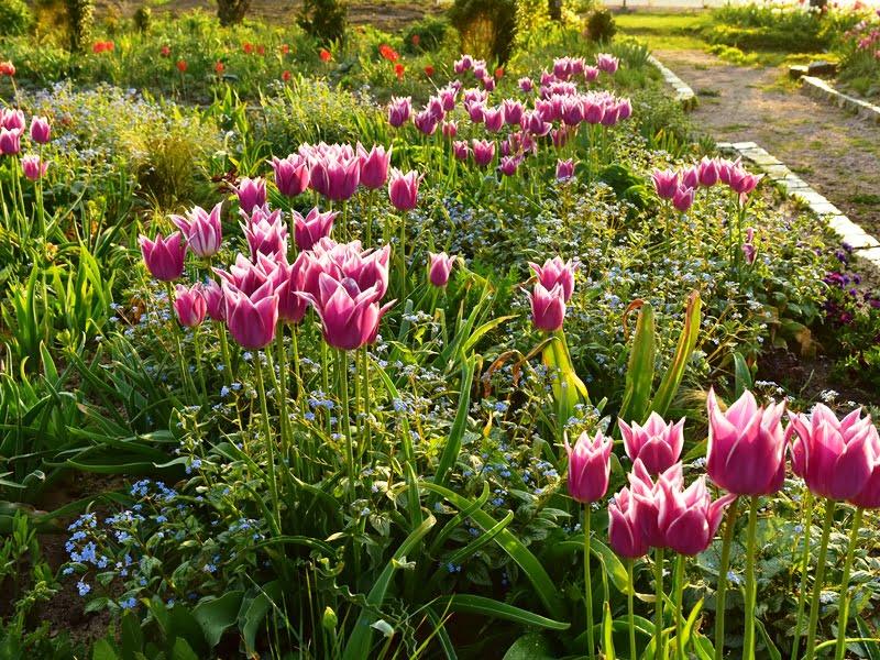 Kurdamas želdynus viešosiose vietose, dizaineris prideda daugiau žydinčių augalų. Taip gėlynai atrodo dekoratyviau ir labiau patinka žmonėms.