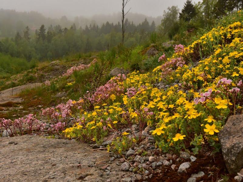 Šiuo metu dizaineriu dirbantis Peter Korn papasakojo, kad savo kelionę apželdinimo srityje pradėjo nuo susidomėjimo  alpiniais augalais.