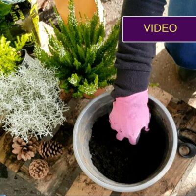 Kalėdinė kompozicija vazone – detali video instrukcija!