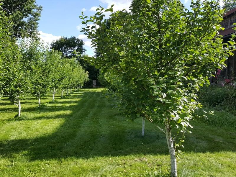 Jaunam vaismedžių sodui padėsim nustatyti tinkamą vietą sklype. Dėl seno pagalvosim, kaip pagelbėti. Nuotr. L.Liubertaitė