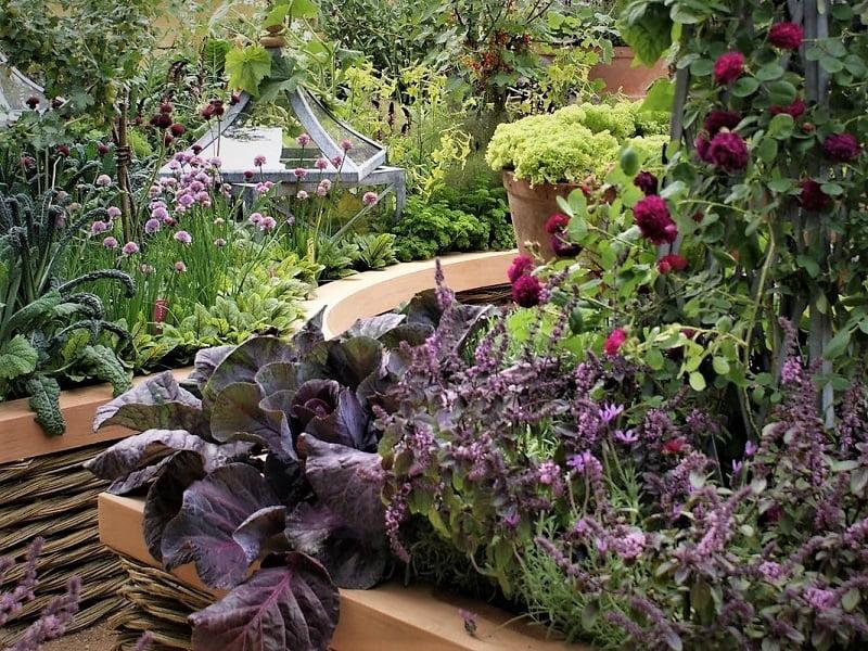 Spalvotos daržovės - šiuolaikiško daržo puošmena
