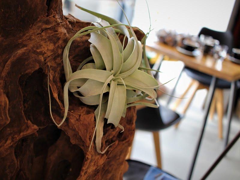 Oro augalai: šiuolaikiškas interjero puošybos akcentas. Nuotr.aut. L.Liubertaitė