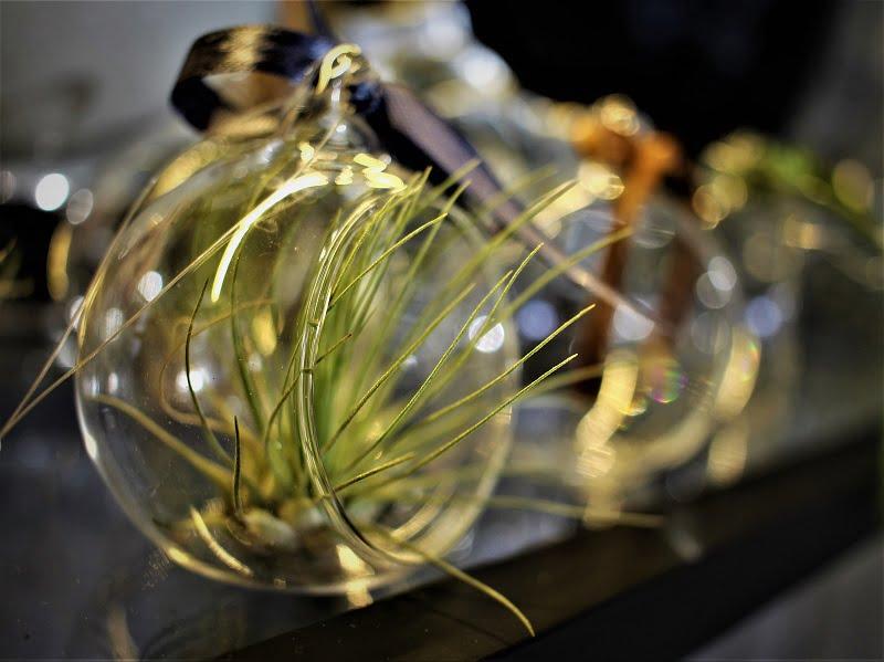 Oro augalai puikiai jaučiasi štai tokiuos stiklo burbuluose. Nuotr.aut. L.Liubertaitė