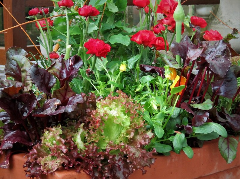 Spalvotos daržovės ir žydinčios gėlės puikiai papildo vienas kito kompaniją