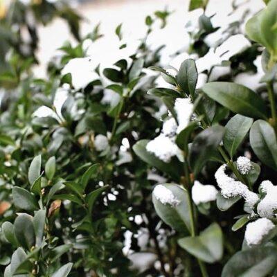 Prognozuoja šaltas saulėtas dienas: kodėl ir kaip dengti augalus?