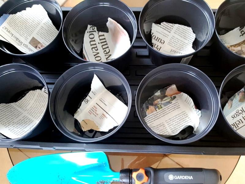 Įklota laikraščio skiautė sulaikys žemes nuo išbyrėjimo, bet praleis vandenį, kad neužsistovėtų. Nuotr. L.Liubertaitė
