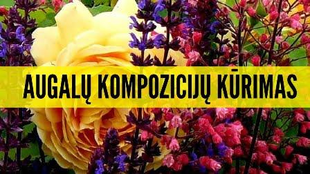 Augalu kompozicijos Geltonas karutis