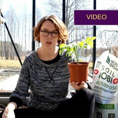 Probiotinės trąšos: kaip naudoti šiltnamyje pavasarį