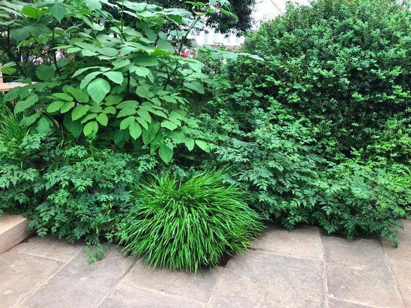 Dėmesį patraukė skirtingos augalų formos, lapų tekstūriškumas. Nuotr.aut. M. Sliesoraitytė (Čelsio gėlių paroda 2018, Londonas)