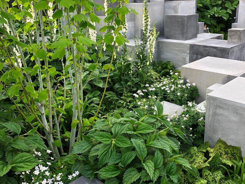 Kaip įprasti augalai sukuria nepaprastą visumą. Nuotr.aut. M. Sliesoraitytė (Čelsio gėlių paroda 2018, Londonas)
