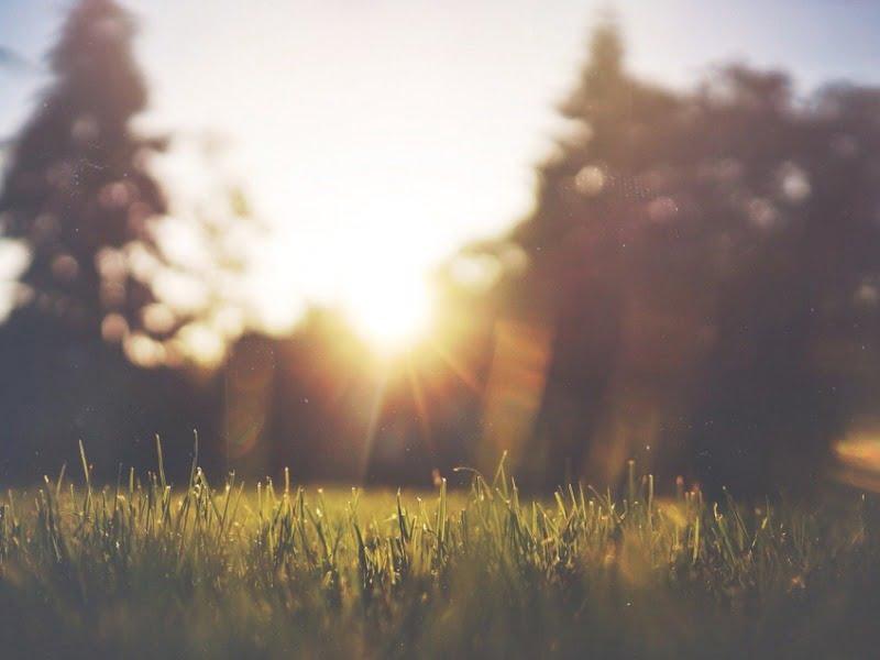 Saulei ir pavėsiui skirtus vejų mišinius galima maišyti.