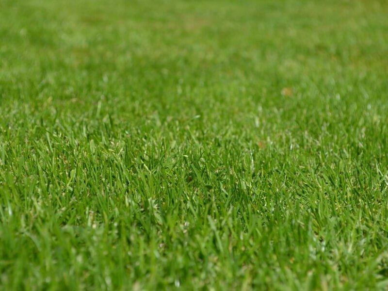 Priklausomai nuo vejos būklės, svarbu reguliuoti žolės aukštį.