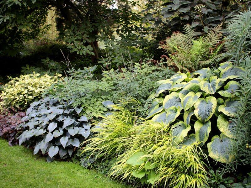 Žemę dengianti augalų kompozicija iš Beth Chatto sodo, kuris remiasi ekologijos principais. Nuotr. aut. L. Liubertaitė.