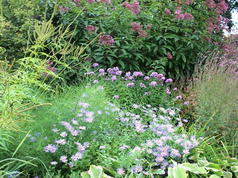 Daugiamečių augalų kompozicija iš Beth Chatto sodo. Nuotr. aut. L. Liubertaitė.