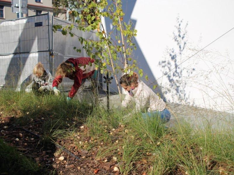 Nuotraukoje savanoriai sodina svogūnines gėles MO muziejaus sode. Nuotr. aut. L. Liubertaitė.