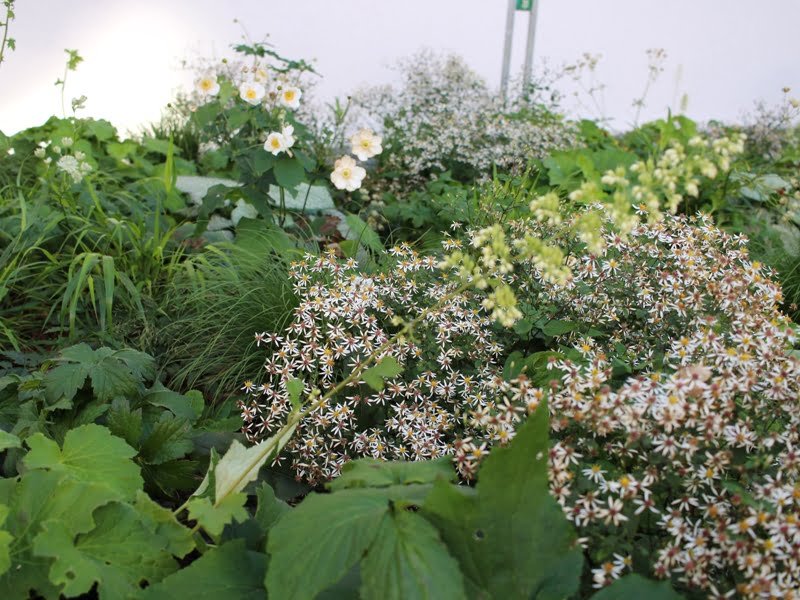 Mo muziejau sode daug žalumos bei augalų, per laiką suaugsiančių į želdyną, kuris nepaliks tuščio žemės ploto. Nuotr. aut. L. Liubertaitė.