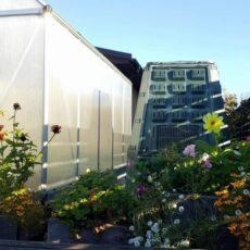 Rudens darbai sode, darže ir gėlyne - dar galima sodinti!