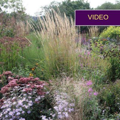 5 patikimi lauko augalai iš pasakiškos Auksės Dobilienės sodybos