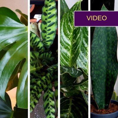 Stilingiems namams: 7 kambariniai augalai, mėgstantys tamsą