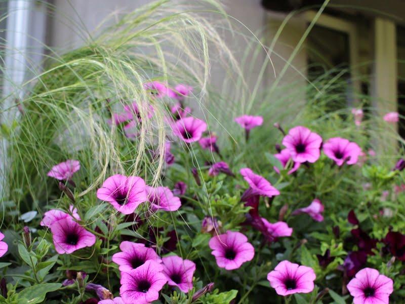Nėra blogų augalų: net ir įprastos vienmetės gėlės gali atrodyti efektingai, jei sukomponuotos su kitais augalais ir dera spalviškai prie interjero. Kompozicija iš Vaivos terasos. Nuotr. aut. L.Liubertaitė