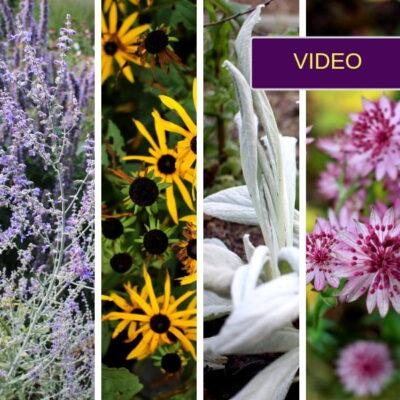 100 augalų: dovanoju patikimų ir gražių augalų rekomendacijas