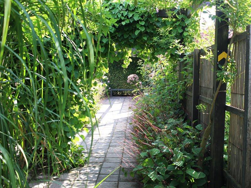 Dėmėtoji rūgtis palei taką - labai romantiška ir subtilu. Mien Ruys sodai, Olandija. Nuotr. aut. L.Liubertaitė