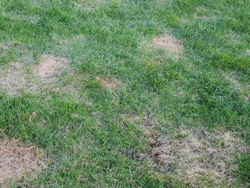 Prie daugiabucio sunu paliktos zymes ant vejos