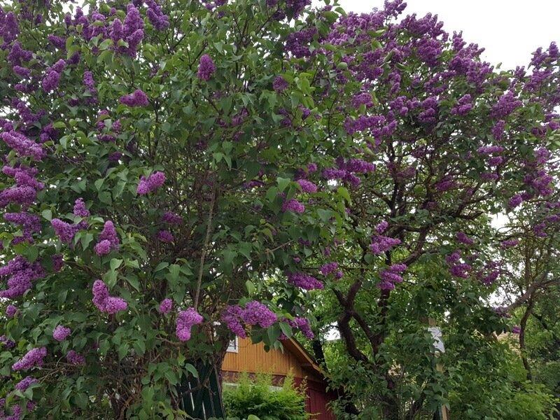 planuojamus palikti augalus vasara susizymekite virvelemis