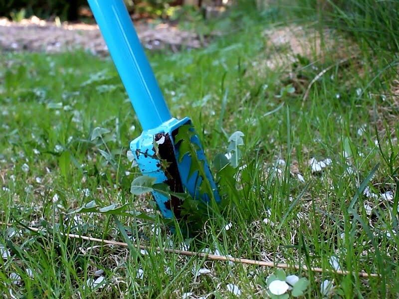 Piktžolių ravėtuvas: įsmeigti