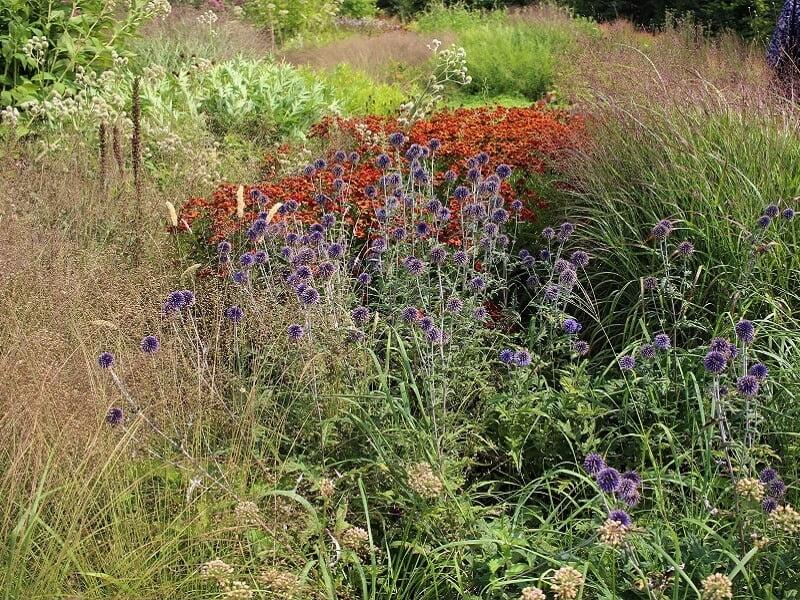 Bandrenis sausros nebijantys augalai