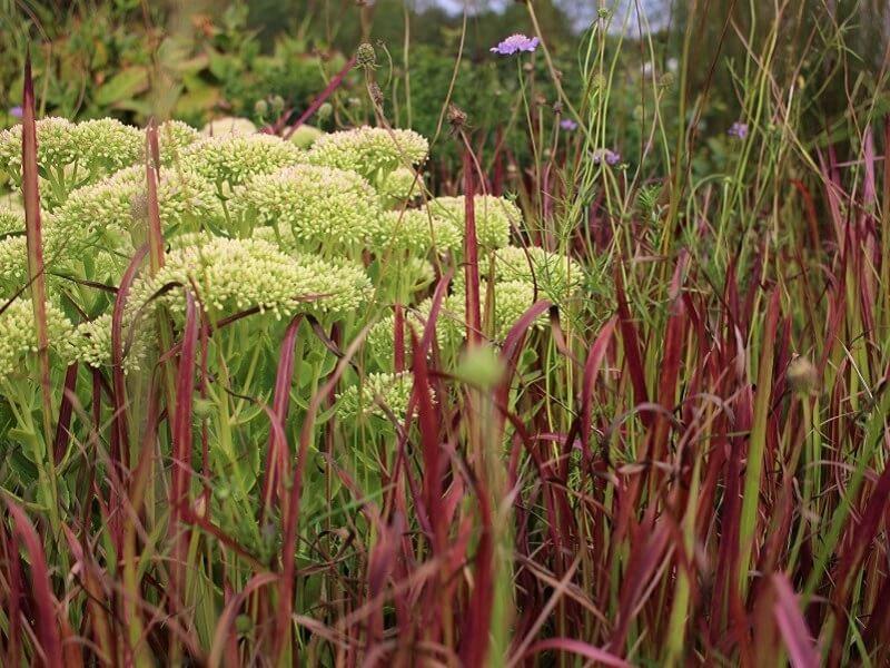 Silokai bresta zydejimui sausos nebijantys augalai