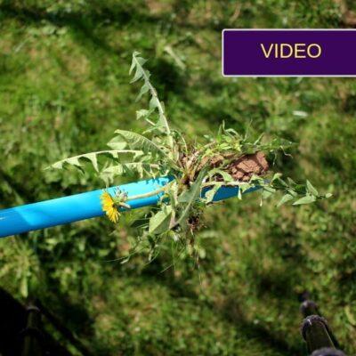 Piktžolių ravėtuvas: pažiūrėkit, kaip lengva išrauti pienes