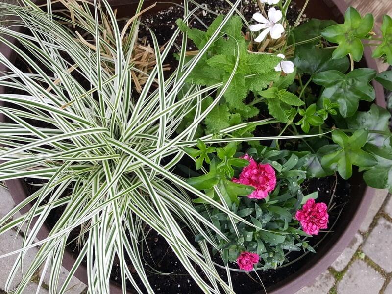 Vazoninės gėlės terasoje