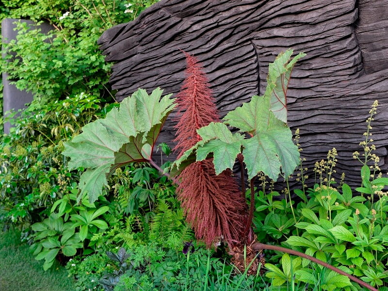 Parodos sodai: Andy Sturgeon su M&G Garden ir tokia įspūdinga puikiai įkomponuota gunera