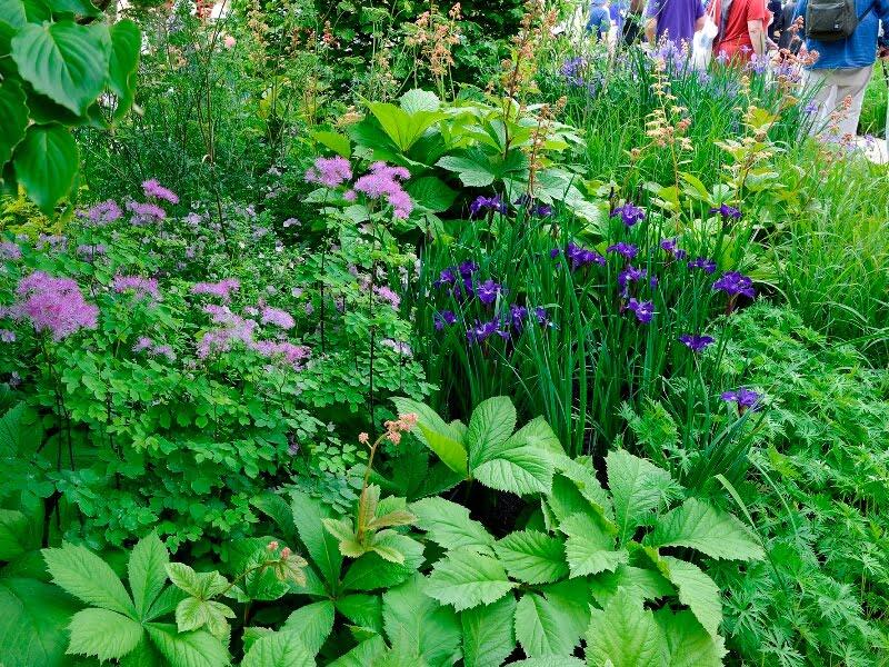 """Dažniausiai """"RHS Chelsea Flower Show"""" pastebėti deriniai ir su rodžersija (Rodgersia). Nuotr. Alina Batavičiūtė"""