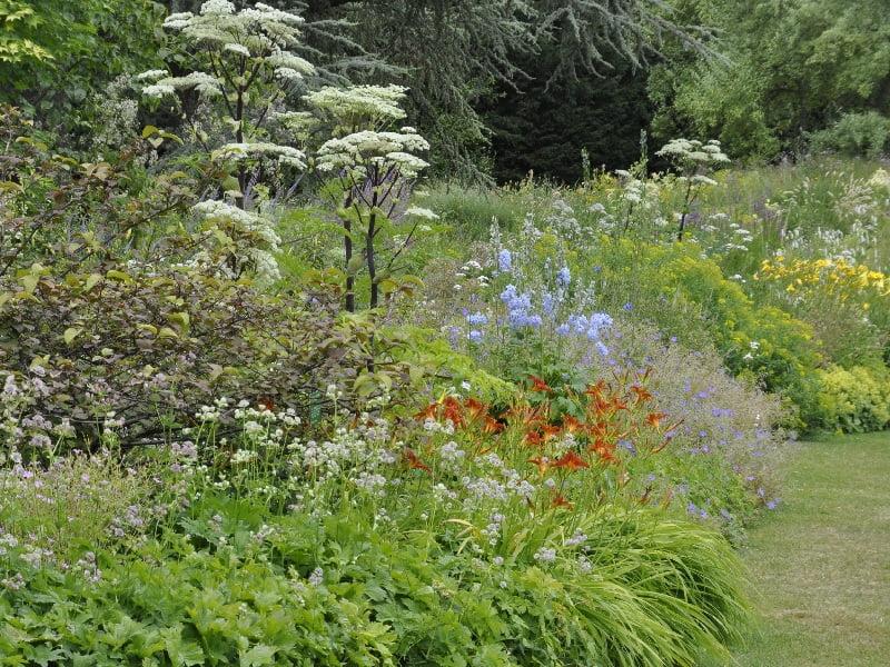 Aukšta miško pieva su 'Angelica dahurica'. Asmeninio Cassian Schmidt archyvo nuotrauka