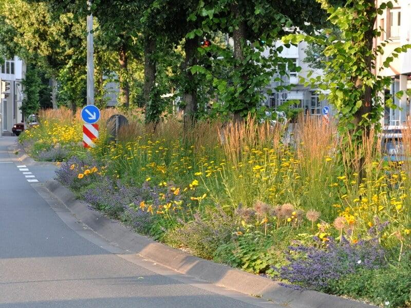 Įvairių augalų kompozicija prie judraus miesto kelio. Asmeninio Cassian Schmidt archyvo nuotrauka.