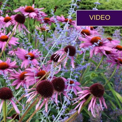 Natūralistinis gėlynas Jonavos rajone + augalų sąrašas!