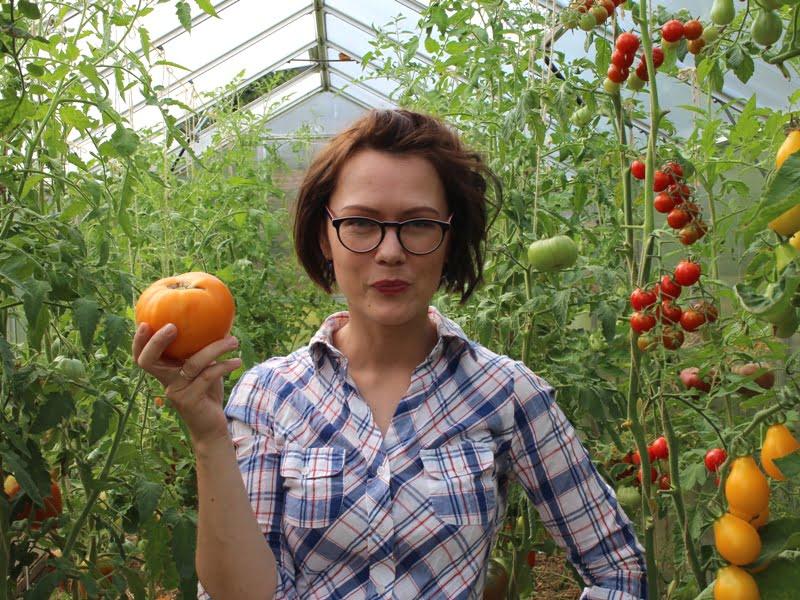 Pomidorai 'Jantar' yra ne tik skanūs, bet ir tobulai geltonos spalvos. Nuotr. L.Liubertaitė