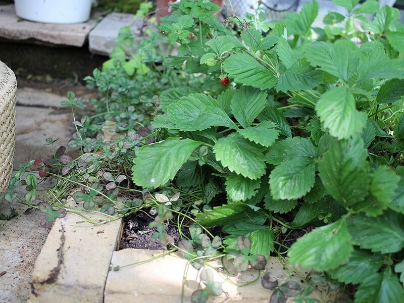Lauko augalai glaudžiasi krašte. stilingas šiltnamis nėra skirtas augalams