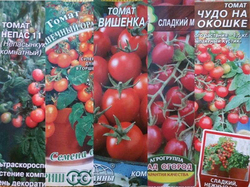 Pomidorų auginimas mokykloje sėklos