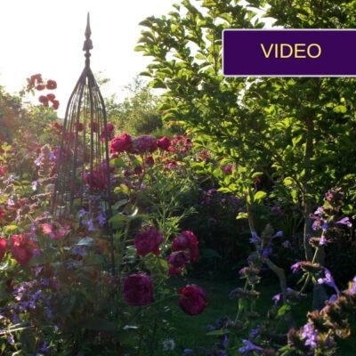 Įspūdingas Giedrės rožynas – sodyboje vietoj bulvių lauko!